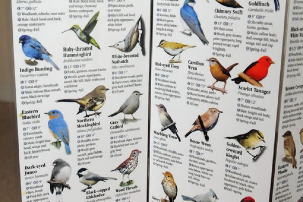 BirdGuide-Ches-West_7422-lg