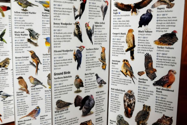 BirdGuide-Virginia_7483-lg