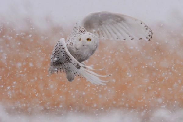Snow_3913-sm