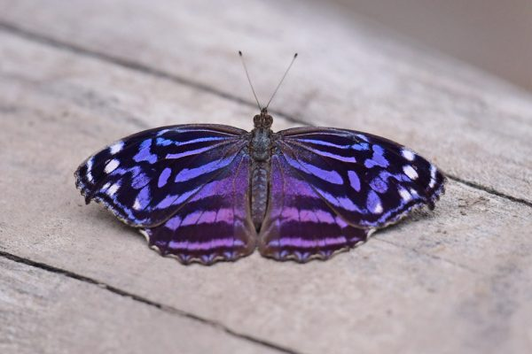 04-Bluewing_3399-lr