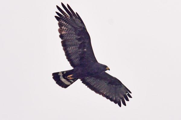 11-Hawk-Zone_4324-lr