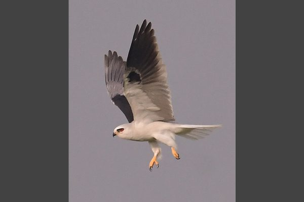 Vertical-20-Kite_4545-lr