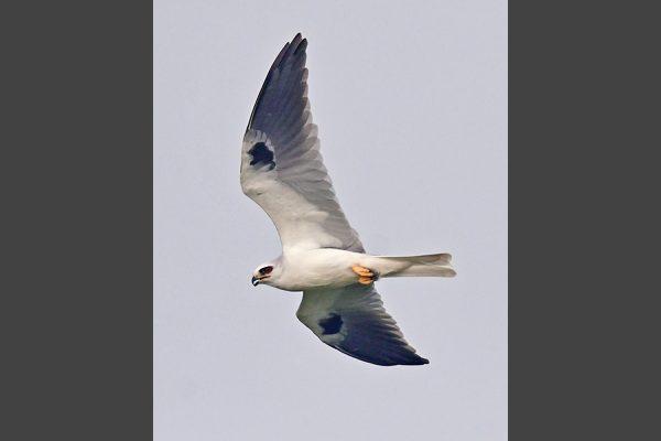 Vertical-21-Kite_4582-lr