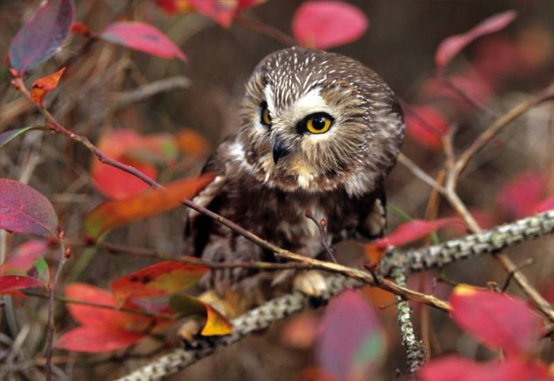 Adorable Owl