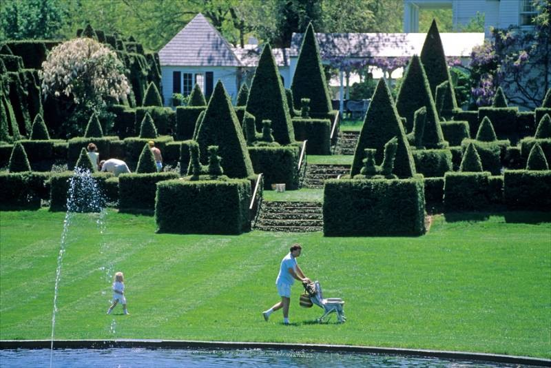 Topiary Delights